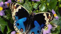 Как разводить бабочек