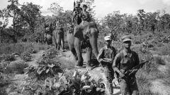 Как животные помогали людям во время войны