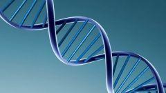 Как открыли ДНК