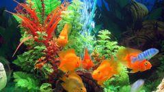 Мой первый аквариум: кого завести