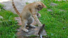 Почему кошкам нельзя давать рыбу