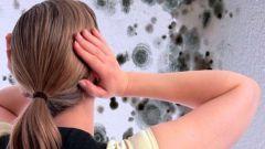 Как боротся с сыростью в доме