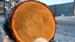 Почему стволы деревьев круглые