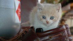 Как воспитать ласкового котенка