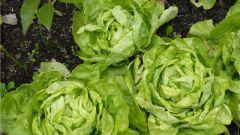 Почему салат называется айсберг