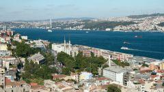 Каких насекомых стоит опасаться в Турции