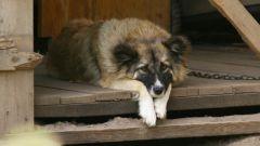 Как выявить депрессию у животного