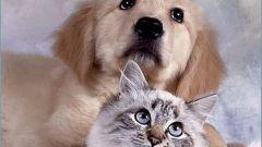Куда сдать домашнее животное, на которого аллергия
