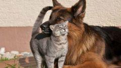 Как приучить собаку не бросаться на кошек