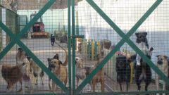 Московские приюты для животных