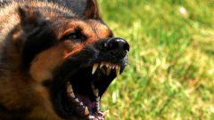 Что такое бешенство у собак