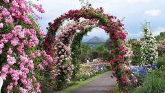 Неповторимый дизайн сада на основе арок и крытых аллей