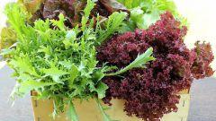 Как выбрать листовой салат