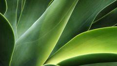 Как видоизменяются листья