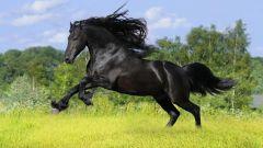 Как помыть коня