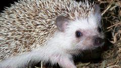 Where and how hedgehogs hibernate