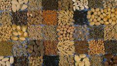 Как и чем протравить семена перед посадкой