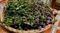 Какое растение в средние века называли