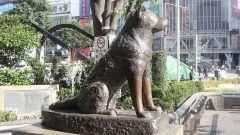 Где и за что поставили памятник Хатико