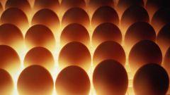 Как хранить куриные яйца