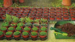 Какие семена сеют в марте