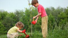 Особенности питания растений