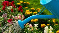 Как спасти грядки от жары