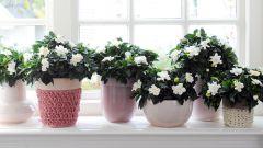 10 правил по уходу за комнатными растениями
