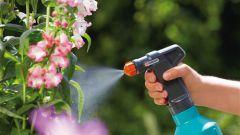 Как защитить растения от вредителей и болезней народными средствами