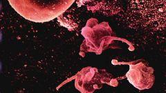 Как передается микоплазма