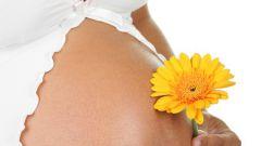 Как меняется состав крови при беременности