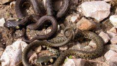 Как змеи меняют кожу