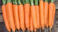 Как обработать семена моркови для хранения