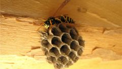How to get rid of wasps and remove wasp nest
