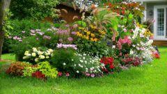 Какие многолетние цветы можно посеять в июне