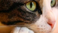 Что такое наполнитель для кошачьего туалета