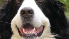 Как избежать зубных болезней у собак