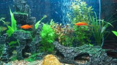 How to get rid of plaque in the aquarium