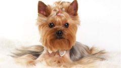 3 самые популярные породы собак