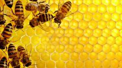 Зимовка пчел: как и чем кормить