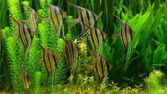 К чему снятся рыбы в аквариуме