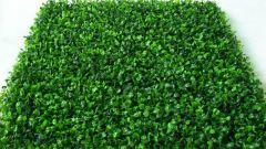 Преимущества синтетической травы перед натуральной