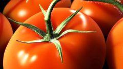 Как собрать свои семена помидоров