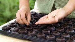 Как правильно сеять семена в таблетки