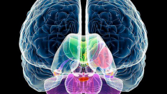 Как узнать, какое полушарие мозга у вас наиболее развито