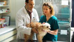Как понять, беременна собака или нет