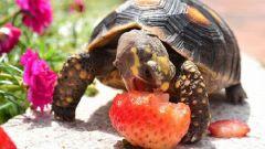 Все о черепахах: как их содержать