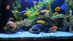 Все для аквариума: как начать
