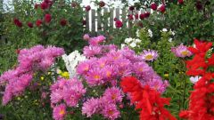 Какие цветы посадить в огороде