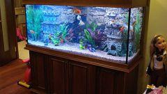 Все об аквариуме: как правильно содержать